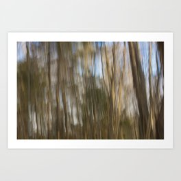 Cape Elizabeth Land Trust Trees Art Print