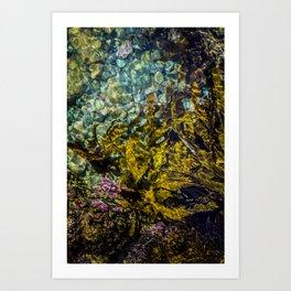 rockpool Art Print