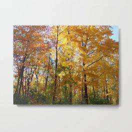 Peek through the Trees Metal Print