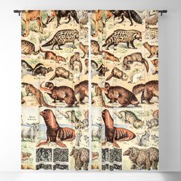 Cute Animals // Fourrures by Adolphe Millot XL 19th Century Science Textbook Diagram Artwork Blackout Curtain
