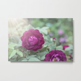Raspberry Roses on Aqua and Mint Metal Print