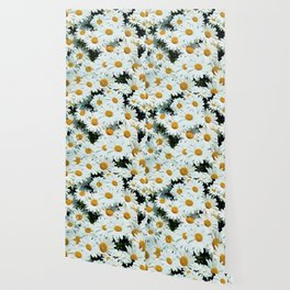 Daisies explode into flower Wallpaper