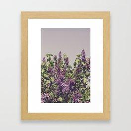 Wild Lilacs Framed Art Print