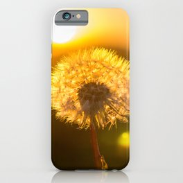 Dandelion with sunset sky in the background iPhone Case