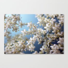 tiny whites Canvas Print