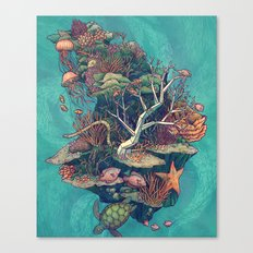 Coral Communities Canvas Print