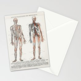 The Human Blood Vessels 1898 Stationery Cards