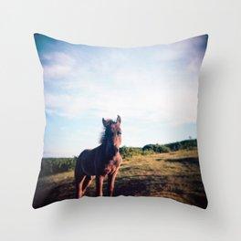 Dartmoor Pony Portrait (3) Throw Pillow