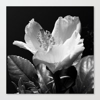 clear Canvas Prints featuring Clear by Carrie McGann