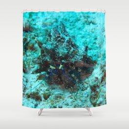 Blue hermit crab Shower Curtain