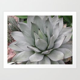 In the Conservatory Art Print