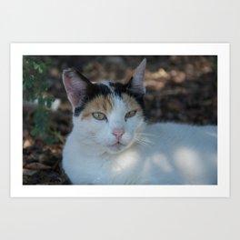 Cat Dubrovnik Art Print