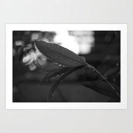 Tropical Rains Art Print