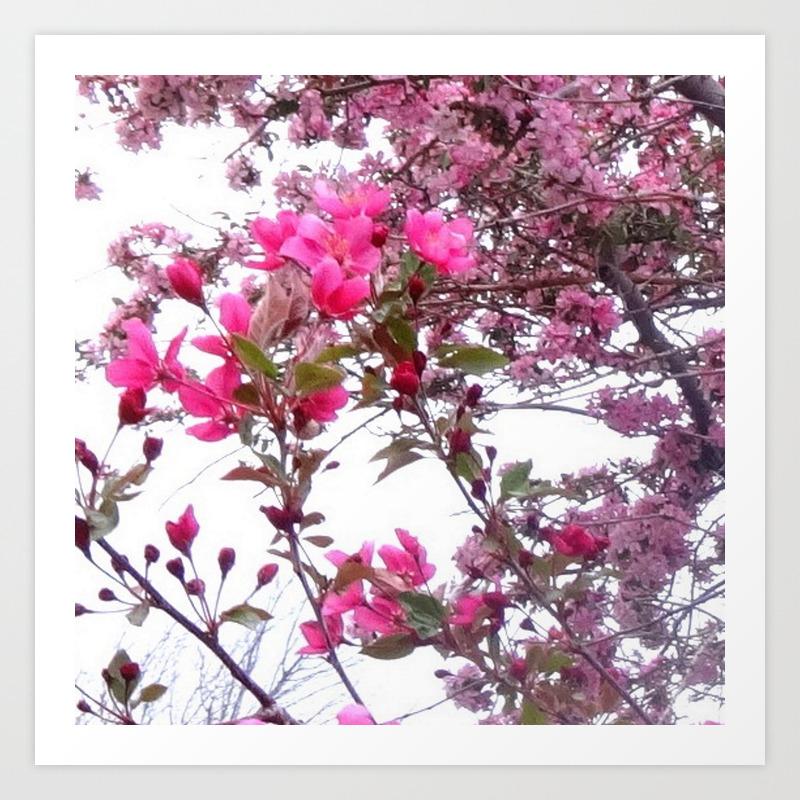 Flowering Pink Crabapple Trees Spring Floral Art Print By