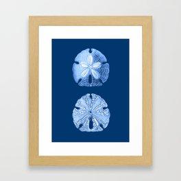 Sand Dollar Sea Life Print, Indigo Blue and White Framed Art Print