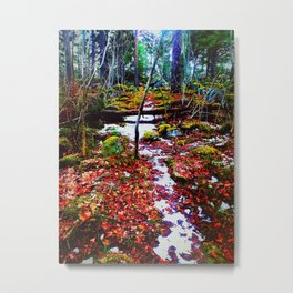 A Path in a Forest Metal Print