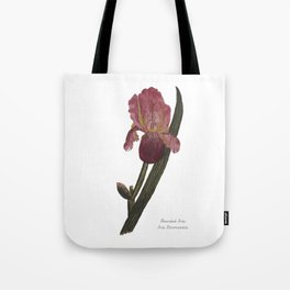 Bearded Iris: Iris Germanica Tote Bag