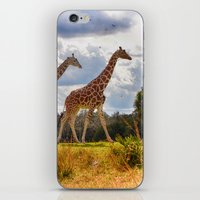 giraffes iPhone & iPod Skins featuring Giraffes by Photography by Terrance