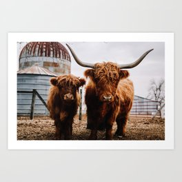 Scottish Highland Cattle: Mom & Babe  Art Print