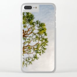 Maritime pine in French Riviera in a sunny winter day Clear iPhone Case