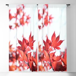 Red Maple by Denise Dietrich Blackout Curtain