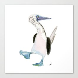 Blue Footed Booby Canvas Print