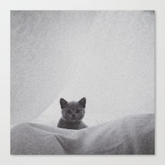 Kitten under the sheets Canvas Print