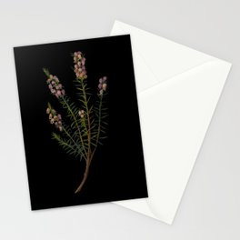 Erica Mediterranea by Mary Delany Paper Collage Floral Flower Botanical Mosaic Vintage Scientific Plant Anatomy Stationery Cards