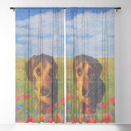 Titan Sheer Curtain