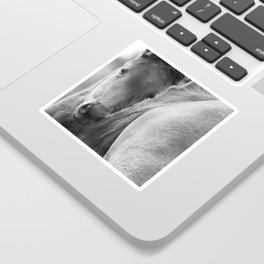Original horses photo. Black & White, fine art, animal photography, landscape, b&w Sticker