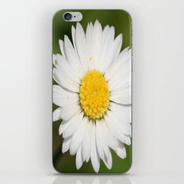Closeup of a Beautiful Yellow and White Daisy flower iPhone Skin