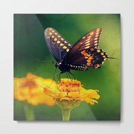 American Swallowtail Metal Print