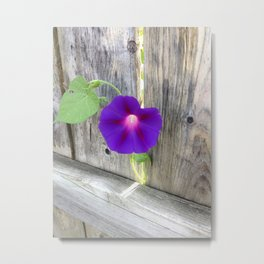 Flower | Flowers | Fence with Purple Flower Metal Print