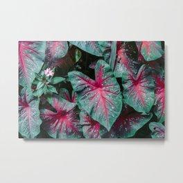 Caladium Leaf Pattern Metal Print