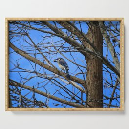 Blue Jay With Acorn Serving Tray