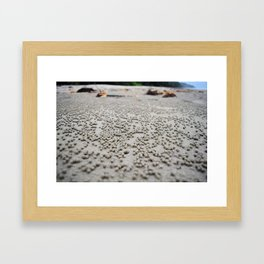 Sand balls on the beach from crabs doing housecleaning Framed Art Print