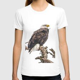January Bald Eagle T-shirt