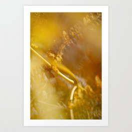 Ferns in Fall - Warm Colorful Close-up Photography - Magic of Autumn - Dreamy Forest Art Print