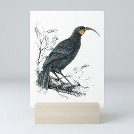 Huia, native bird of New Zealand Mini Art Print