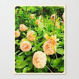 Peaches and Cream Dahlias Canvas Print