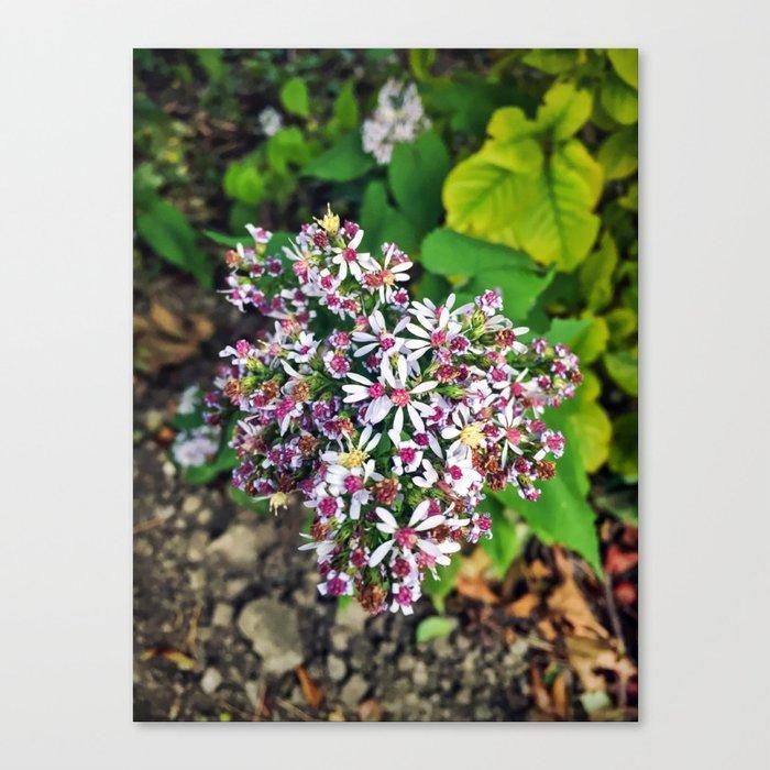 September Flowers Canvas Print