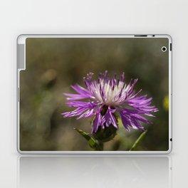 Centaurea alba Laptop & iPad Skin