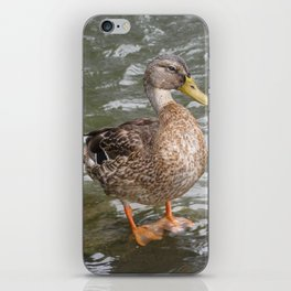 Duck iPhone Skin