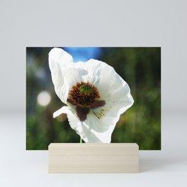 White Poppy in a field Mini Art Print