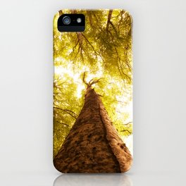 Forest in spring iPhone Case