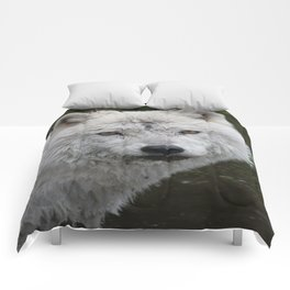 Trusting Comforters
