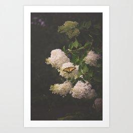 Summer Reverie Art Print