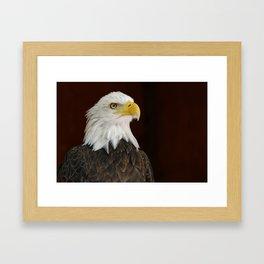 Bald Eagle | Eagles | Freedom | Eagle Photography | Bird of Prey Framed Art Print