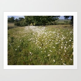 Path of Daisies Art Print