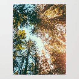 California Redwoods Sun-rays and Sky Poster